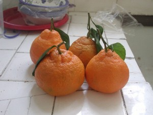 Satsumas - a dangerous force