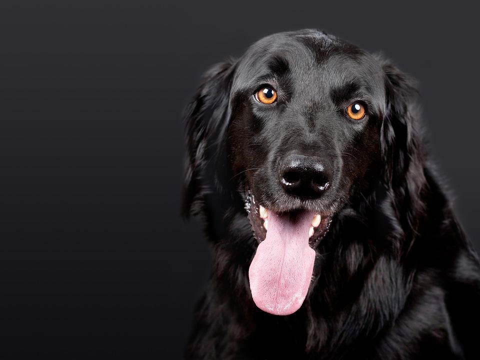 A black dog, yesterday